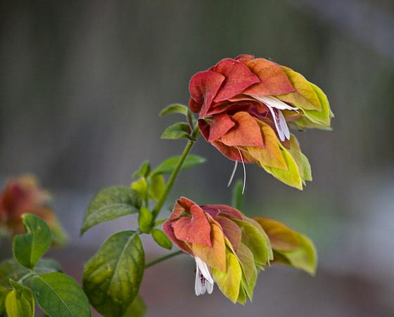 Interesting Flower at Living Desert