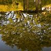 Gazebo & Tree Reflection, Santa Barbara Park