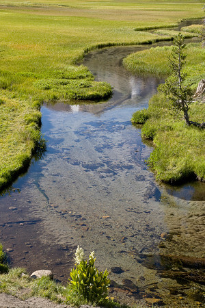 Meandering Through The Meadow (Lassen)