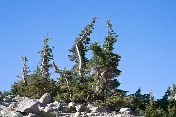 Trees at Lake Helen