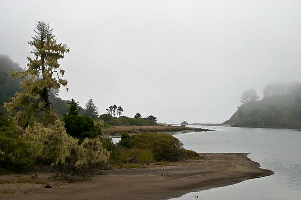 Moss-covered Snag, Elk River Estuary
