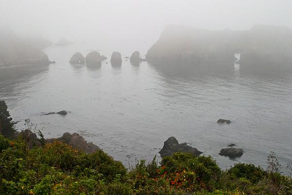 Foggy Elk River Coast