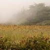 Field Of Fog, Elk River