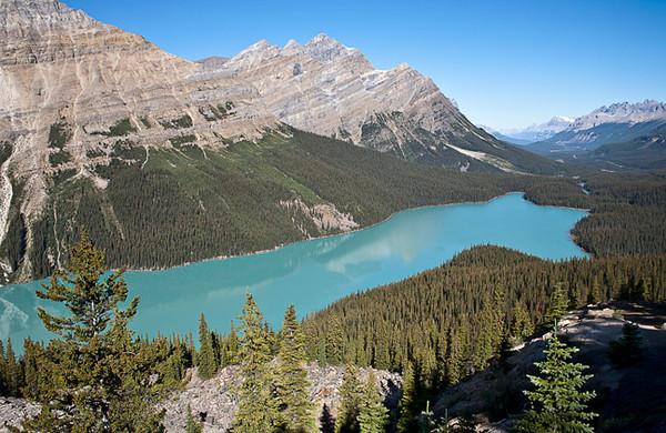 The Iconic Shot Of Peyto Lake (Banff NP)