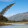 Along the Kootenay River I