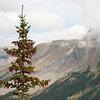Cones  (Parker Ridge)