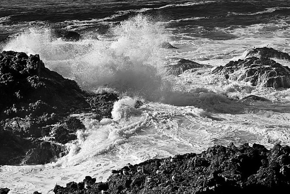 Splash (Sonoma Coast)