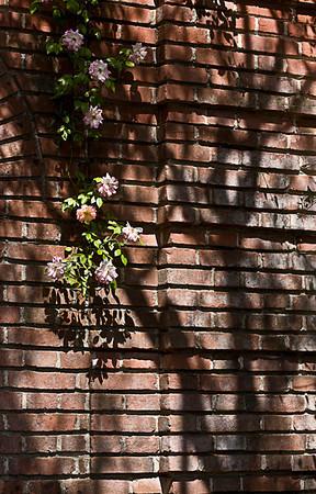 The Garden Wall (Filoli Gardens)