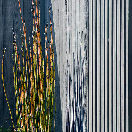 Horsetail & Fence