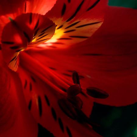 Red! (Compass Gardens)