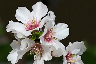 Almond Joy I