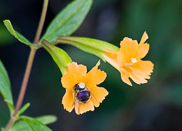 Snug As a Bug (Pinnacles National Monument)