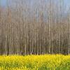 Sonoma Seasons (February)