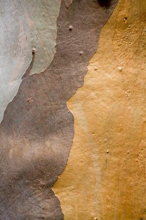Eucalyptus Abstract I (actual bark pattern)