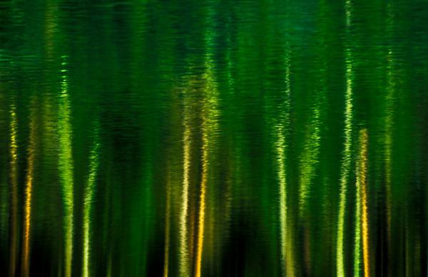 Nearly Neon Tree Refliction