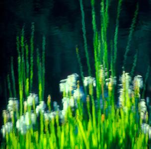 Water Posies II
