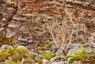 Sabino Canyon Filigree