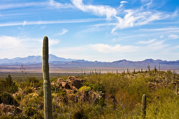 From Sonoran Desert Museum