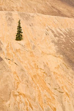 Lone Tree (Animas River Road)