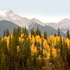 Autumn Along Animas River Road
