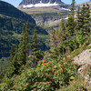 Heading for Logan Pass