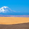 Mt. Adams & Wheat Field Graphics