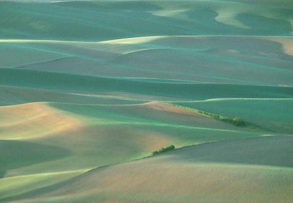 Velveteen Landscape