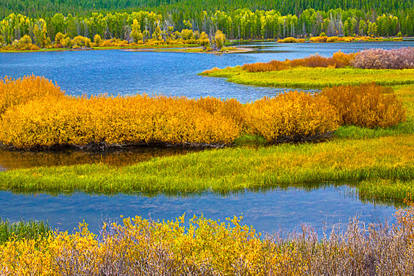 Autumn at the River Bend (Oxbow Bend, Snake River)