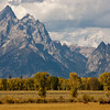 Grazing Beneath the Tetons