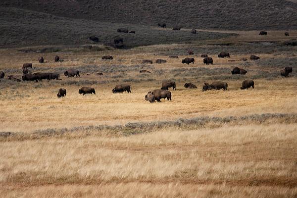 On the Yellowstone Range