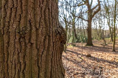 Trees in Hockley Woods - Essex