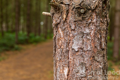 Rendlesham Woods - Suffolk