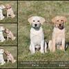 PuppiesPCT