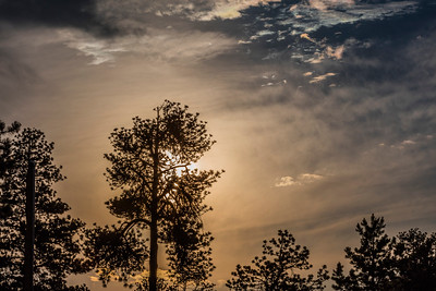 Woodland-Park-01