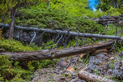 Yellowstone-NP-265