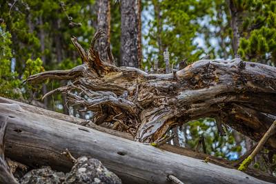 Yellowstone-NP-271