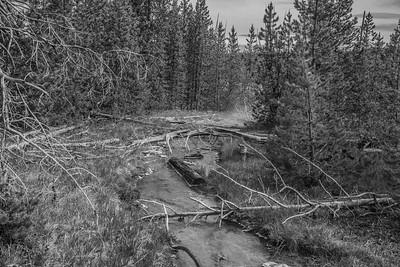 Yellowstone-NP-240