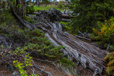 Yellowstone-NP-263