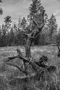 Yellowstone-NP-244