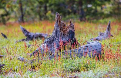 Yellowstone-NP-251