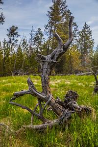 Yellowstone-NP-245