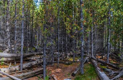 Yellowstone-NP-247
