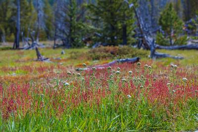 Yellowstone-NP-255