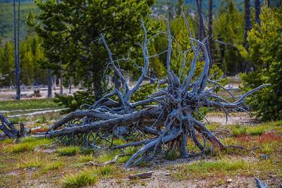 Yellowstone-NP-259