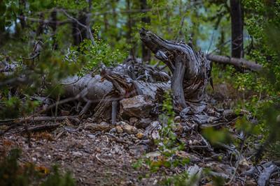 Yellowstone-NP-267