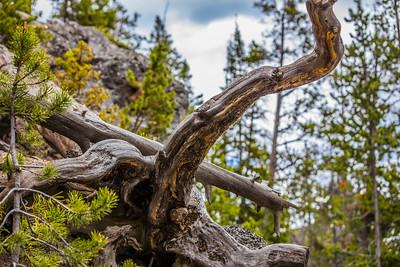 Yellowstone-NP-278