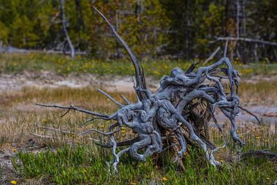 Yellowstone-NP-257