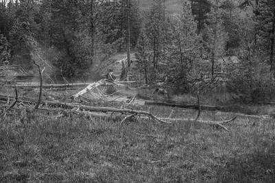 Yellowstone-NP-238