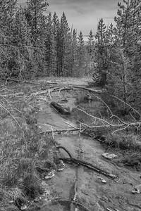 Yellowstone-NP-242