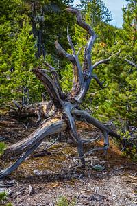 Yellowstone-NP-235